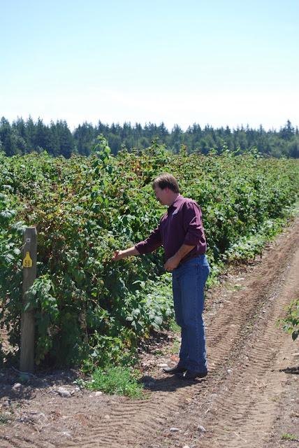Picking fresh raspberries / Credit: Bellingham Whatcom County Tourism