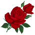 Roseydates Dating - Meet Singles & Adults Nearby