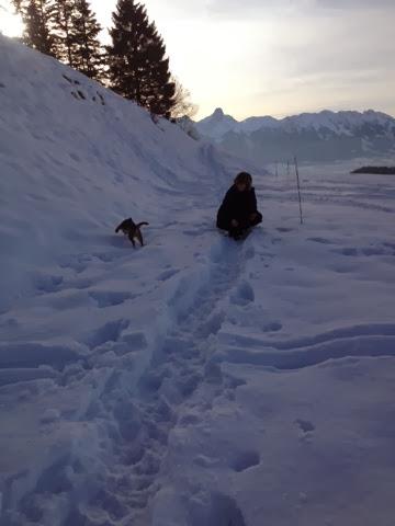 Border Terrier Charly jagt das Apportel im Schnee