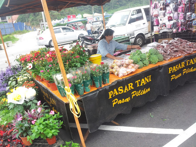 cameron highland, pasar cameron highland, strawberry murah di cameron highland,