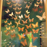 Houston Museum of Natural Science - 116_2858.JPG