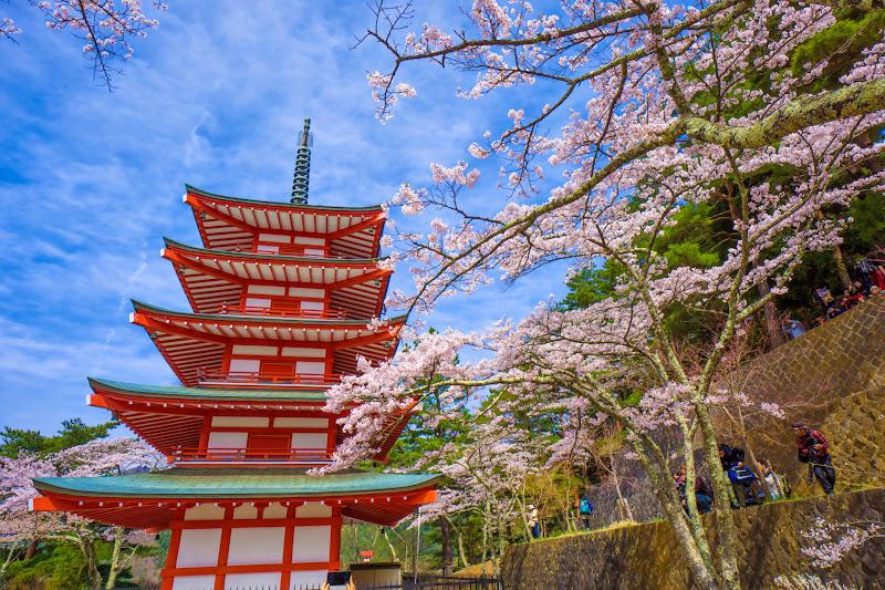 新倉富士浅間神社 桜 写真9