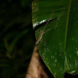 Peruvian Amazon 2007