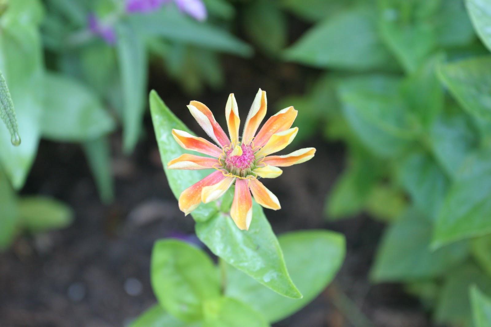Gardening 2012 - IMG_2950.JPG