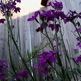 Gardening 2013 - 115_5439.JPG