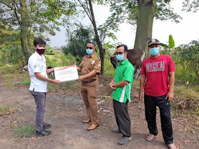 Sambut Idul Adha 1442 H, Coca-Cola Europacific Partners Indonesia Serahkan Hewan Kurban ke Masyarakat Sekitar