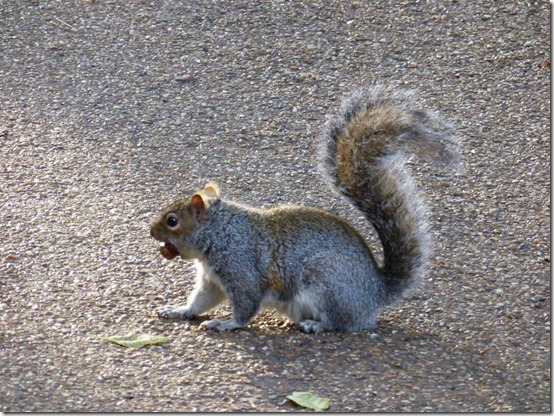 0607Squirrel-with-a-nutSt