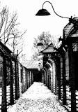 Olocausto - 19420008000353.jpg