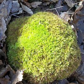 Мъх by Georgi Kolev - Nature Up Close Leaves & Grasses ( гора., слънце., мъх., ден., листа., време. )