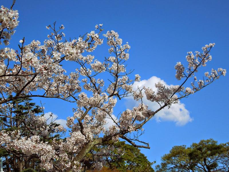 2014 Japan - Dag 7 - danique-DSCN5885.jpg