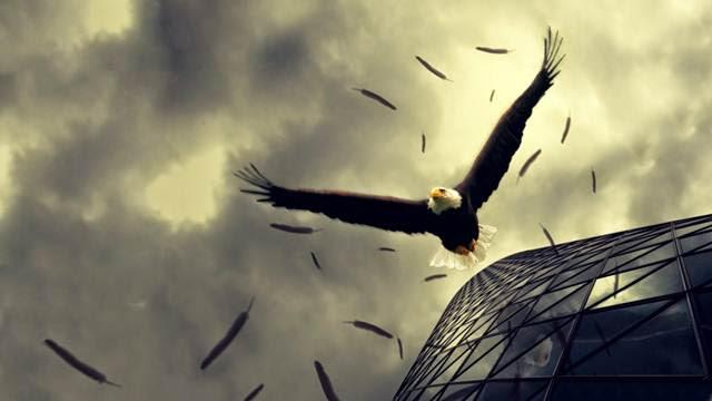 Chim đại bàng trên thân cây chuối