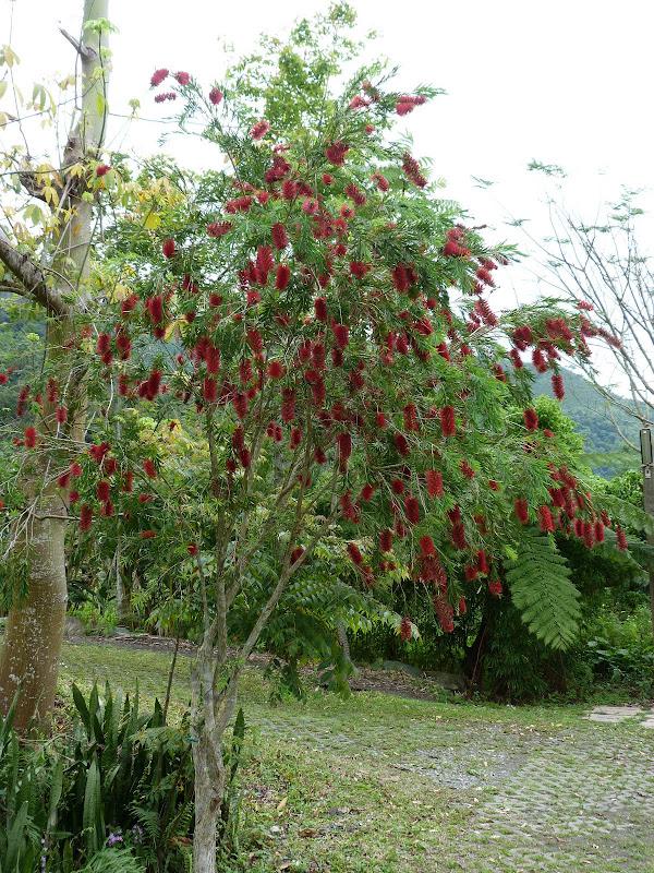 TAIWAN Dans la region de Hualien. Liyu lake.Un weekend chez Monet garden et alentours - P1010653.JPG