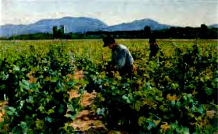 Trabalhadores na vinha