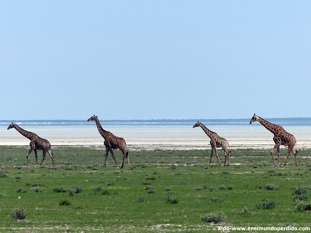 jirafas-ethosa-namibia.JPG