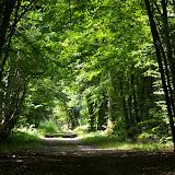 Forêt de Dreux. Les Hautes-Lisières (Rouvres, 28), 29 juin 2011. Photo : J.-M. Gayman