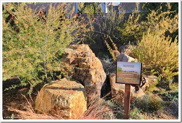 151230_Tucson_Tohono-Chul-Park_0026