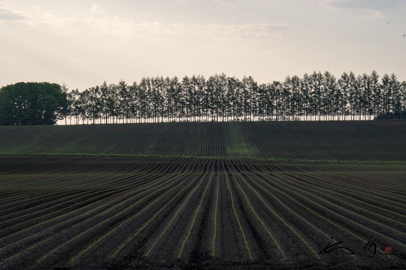 黒檀色の大地が描き出す、新緑の直線模様