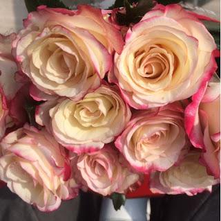 Bosje rozen