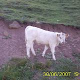 Taga 2007 - PIC_0073.JPG