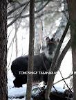 2009/3/30 カモシカの森の直ぐ上、100mと離れていない八木の泉(渋沢から林道へ登ってゆく)で若くて初めて見る個体。おでこが張っているように見えたので「デコ」と名づける。暗くて角の詳細までは写せなかったのが、長そうに見えても曲がりが少ないのは比較的若いカモシカなのかもしれない。