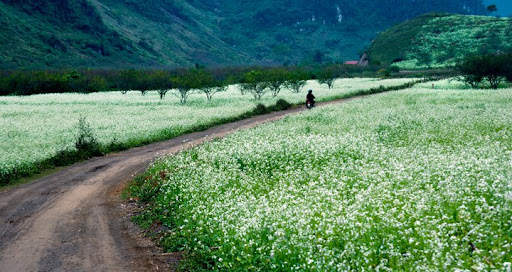 Tao Thao Photo 14