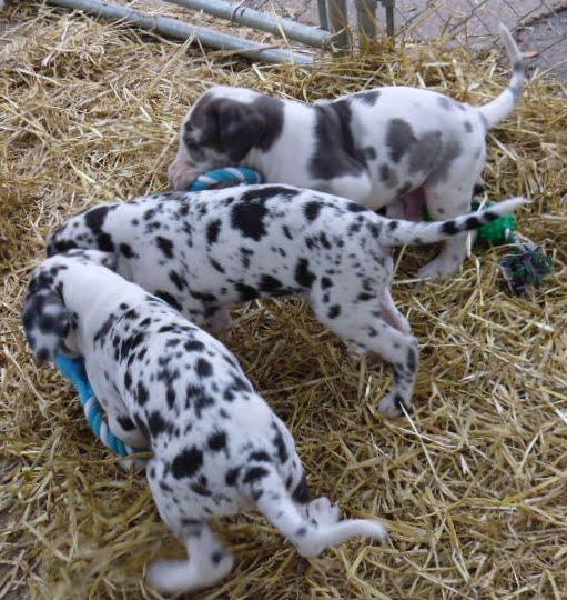 Thelma & Garths 3/21/12 litter - SAM_3295.JPG