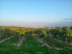 Foto 2: Blick über die Weingärten nach Wien