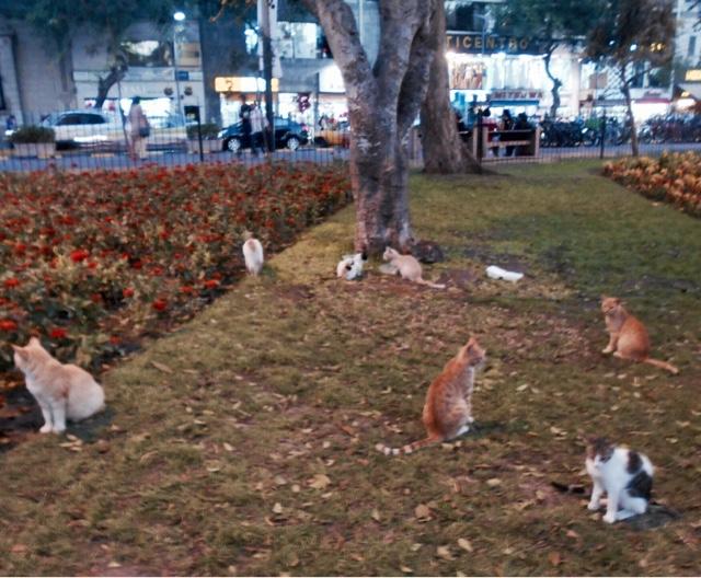 Cat Park in Lima