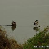 01-26-13 White Rock Lake - IMGP4334.JPG
