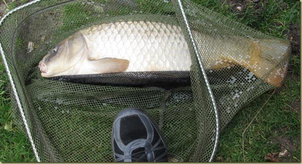 Fish 22 Aug 17 eleven pounds plus