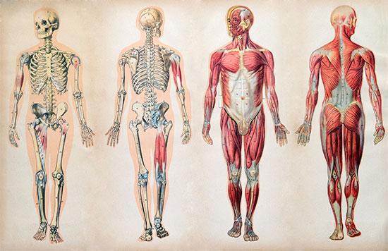 Fakta Menakjubkan perihal Tubuh Manusia  52 Fakta Menakjubkan perihal Tubuh Manusia