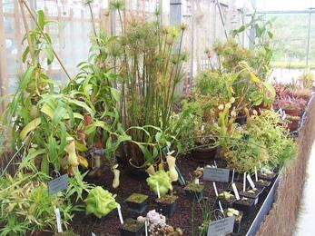 2010.08.13-002 plantes carnivores
