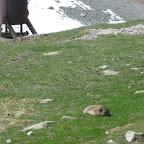 Marmottina assiste al nostro pomeriggio di manovre   [BiG]