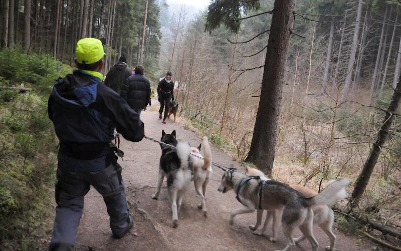 20140101 Neujahrsspaziergang im Waldnaabtal - DSC_9814.JPG