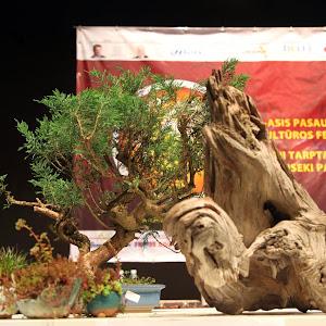 日本文化交流使 リトアニア