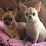 Affie Adagio's profile photo