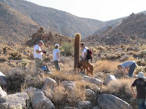 Nice 8' tall barrel cactus.