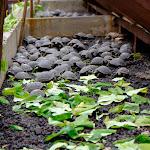 Baby giant galapagos tortoises