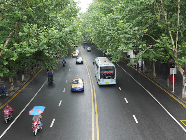 tree-lined street in Changde