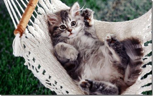 fotos de gatos (2)