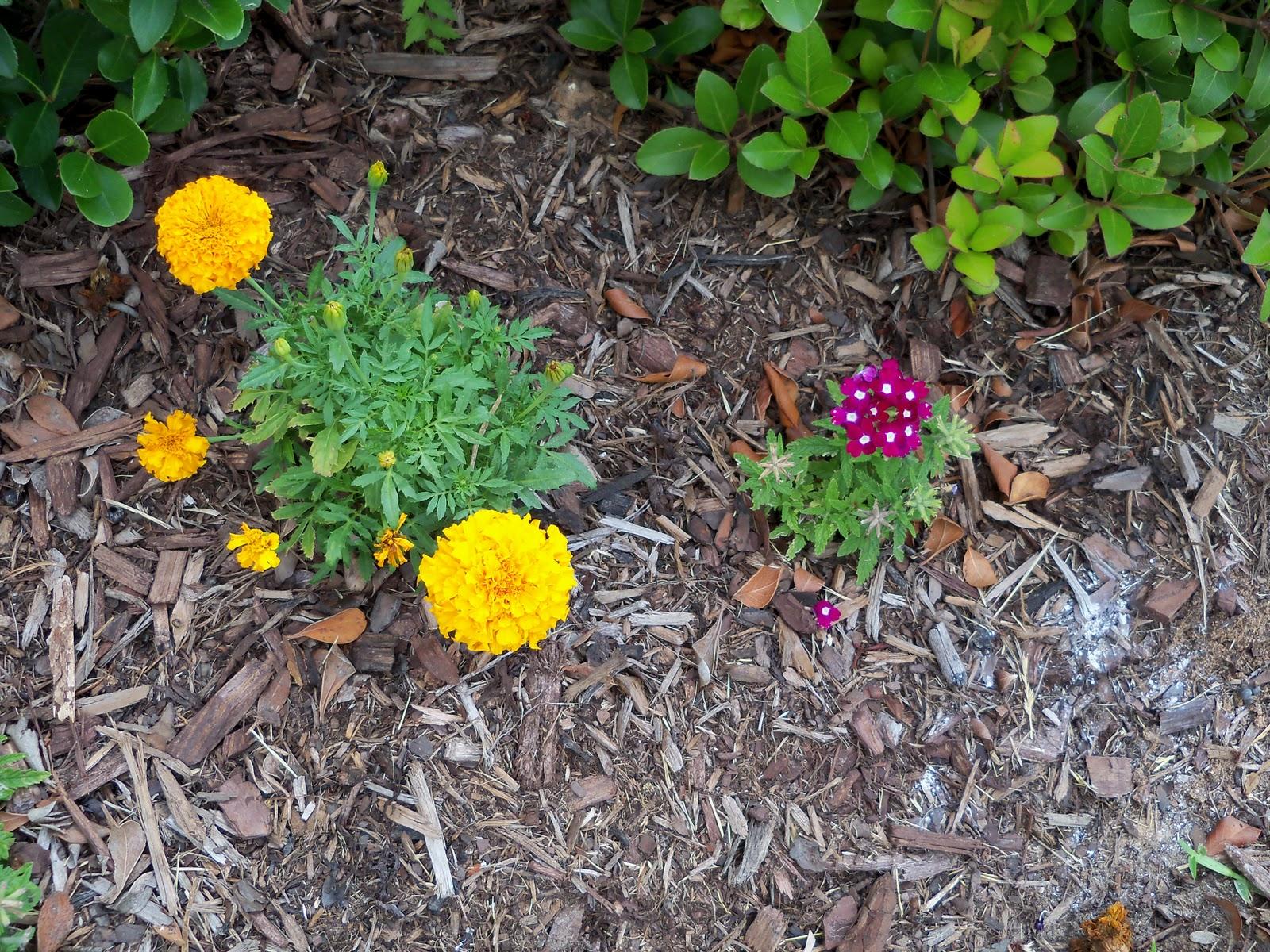 Gardening 2010, Part Two - 101_2845.JPG