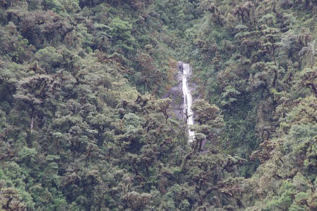 Entre El Limonal et la Merced de Buenos Aires, 2600 m (Imbabura, Équateur), 24 novembre 2013. Photo : J.-M. Gayman