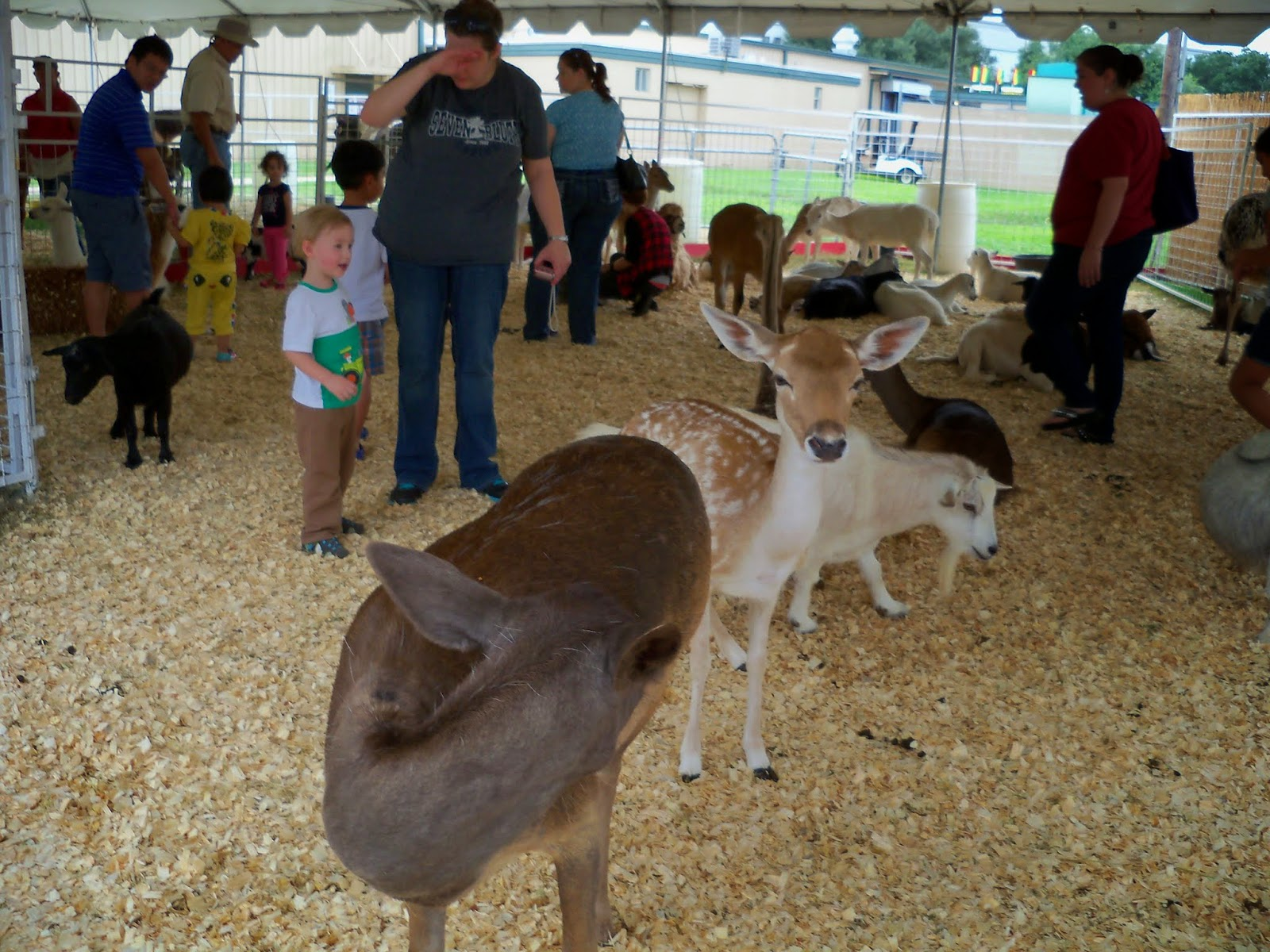 Fort Bend County Fair 2014 - 116_4322.JPG