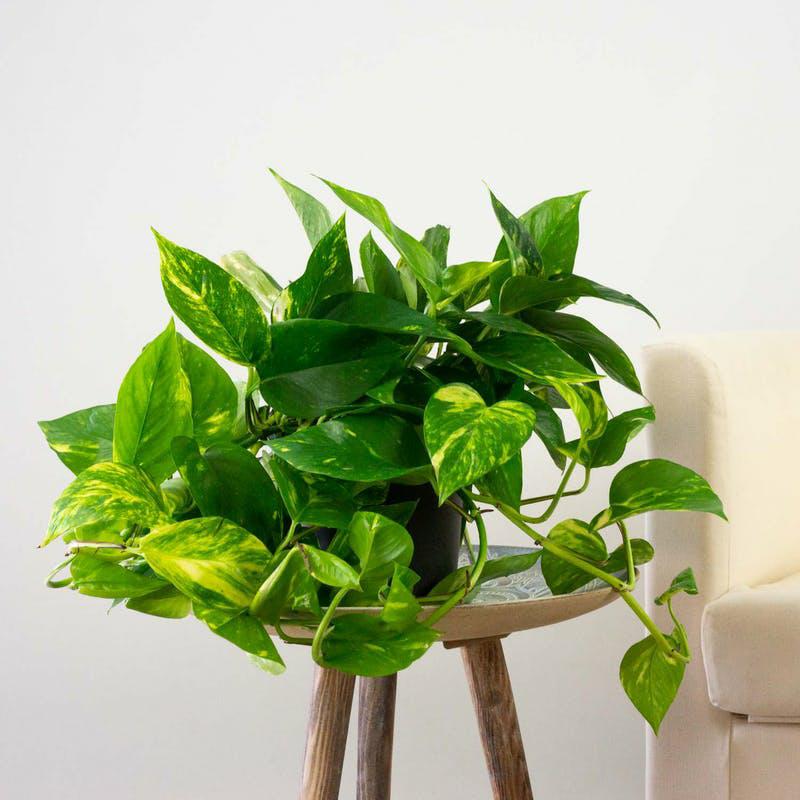 benefici piante