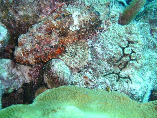 Bonaire 2011 - PICT0161.JPG
