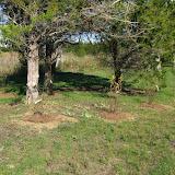 Hammo Planting - Shannon Schiesser - IMG_4953.JPG