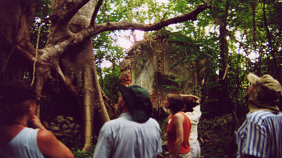 A group of white people looking up at trees and old stone or cement buildings.