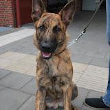 KNON-honden in Emmen - DSC_0746.JPG