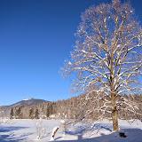 Zima-winter - IMG_3166.jpg