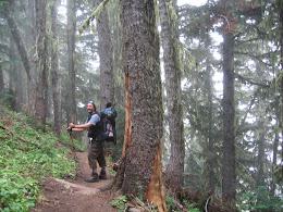 Hiking down through foggy Washington forest.